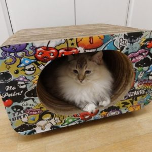 CAT BOX - SIMPLES OVAL